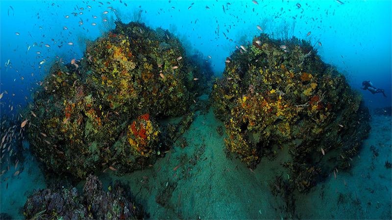Andromède océanologie