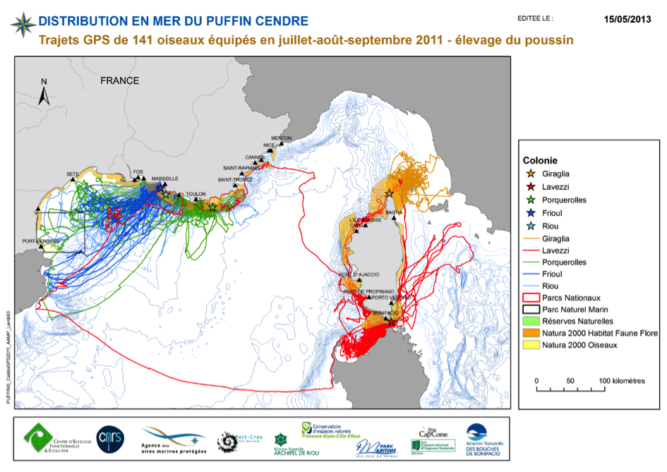 Distribution en mer du puffin cendré
