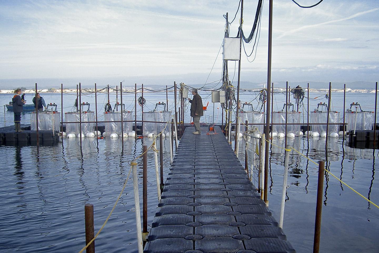 Recherche en environnement côtier de Thau (REC-Thau)