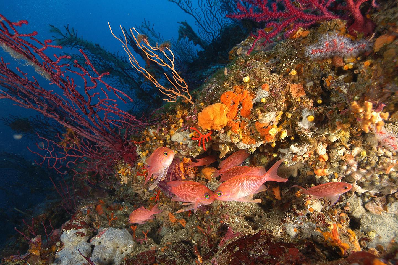to-coralligene
