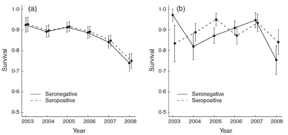 Variations annuelles du taux de survie des Mouettes tridactyles séropositives et séronégatives à l'agent de la maladie de Lyme Borrelia burdgoferi sensu lato sur l'île d'Hornøya